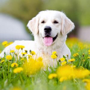 夢占い 犬の夢